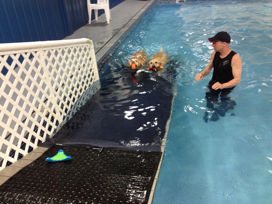 k9-swimmingpool.jpg