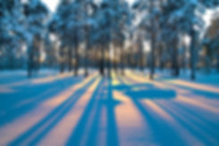forest_sunrise_winter_trees_4489x2983.jp