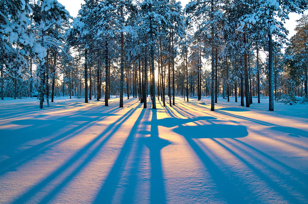 forest_sunrise_winter_trees_4489x2983.jp
