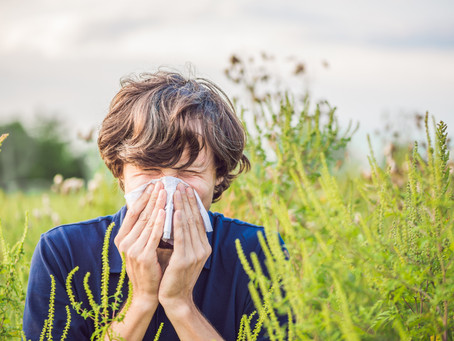 5 Ways You Can Help Your Ragweed Allergies