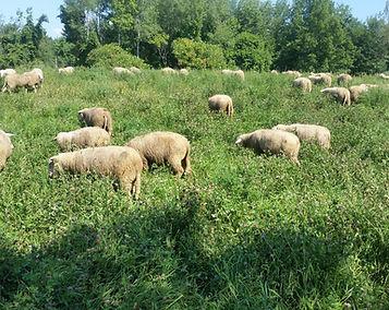 Signal Rock Farm Wool