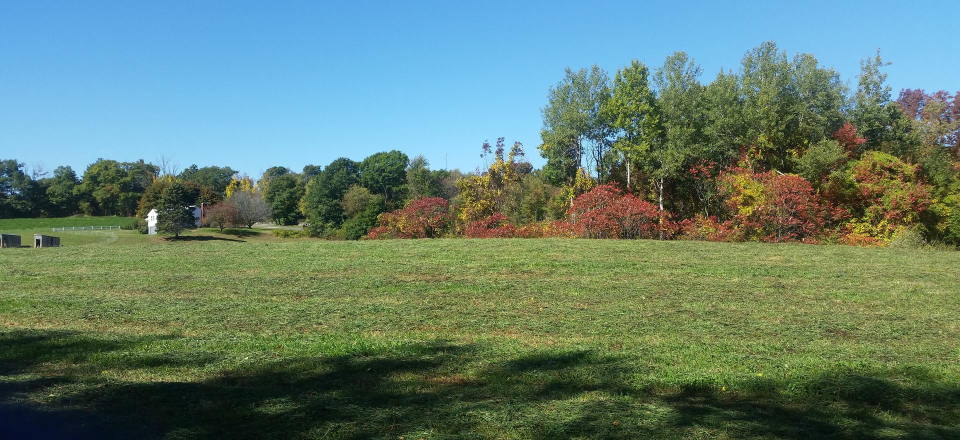 Field on Little Muggett