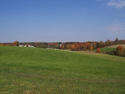 Signal Rock AG Insurance Hay Fields