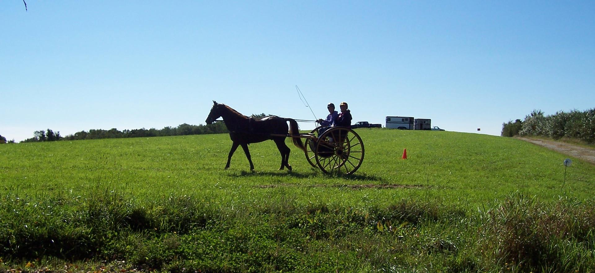 Mass Carriage Association
