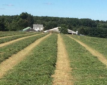 Signal Rock Farm Hay Wind Rows
