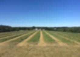 Signal Rock Farm Hay Fields