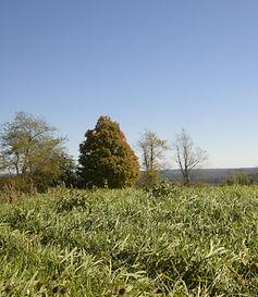Signal Rock Farm grass
