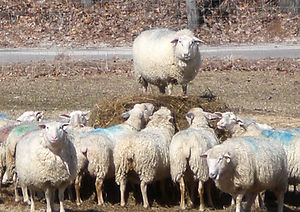 signal rock farm round bales