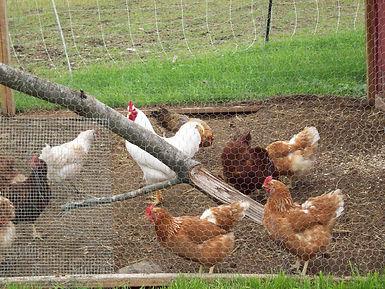 Signal Rock AG Insurace Whole Farm Revenue Protection