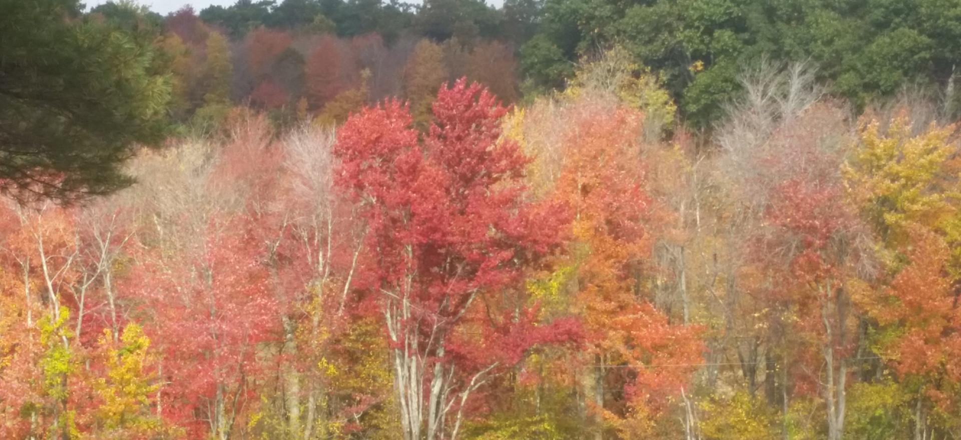 Fall Foliage - Trail Ride Behind Barn