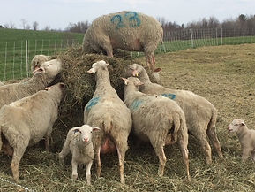 Signal Rock Farm Round Hay Bale