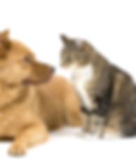 Dog and Cat 3.jpg