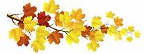 leaves 1.JPG