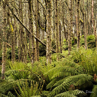 ferns cropped and sized.jpg