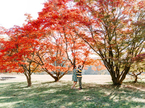 Camden Yards + Cylburn Arboretum Engagement