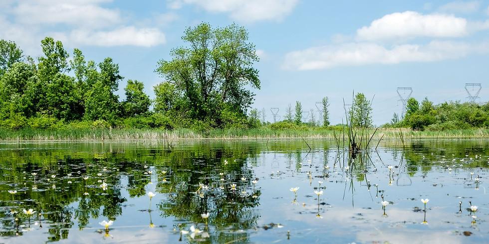 Plastics in our Waterways - Educational Webinar