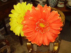 Large Gerber Daisy