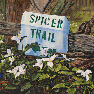 The Spicer Trail