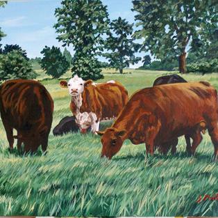 Elgin Beef Cattle