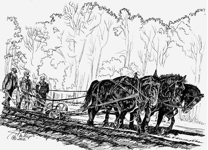 Three-Horse Percheron Hitch.jpg