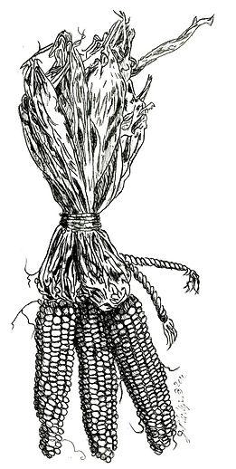 3 Cobs of Corn.jpg
