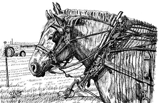 Horses Heads and Fly Chaser Harness.jpg