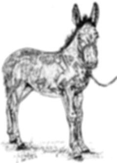 Harvey's Mule Colt.jpg