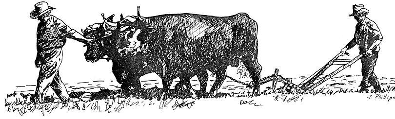 Mac Watson and His Oxen.jpg