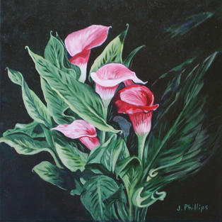 Calla Lillies II
