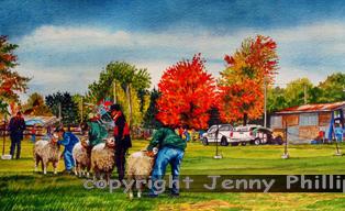 Sheep Judging - Wallacetown Fair