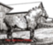P&I percheronstud.jpg