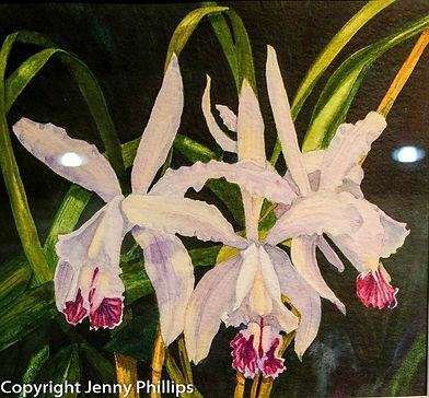 Lillies White.jpg