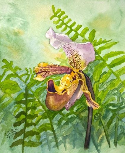 Ladyslipper and Ferns.jpg