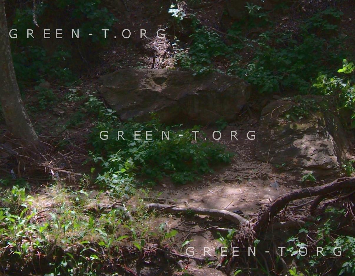 Peaceful Creek detail