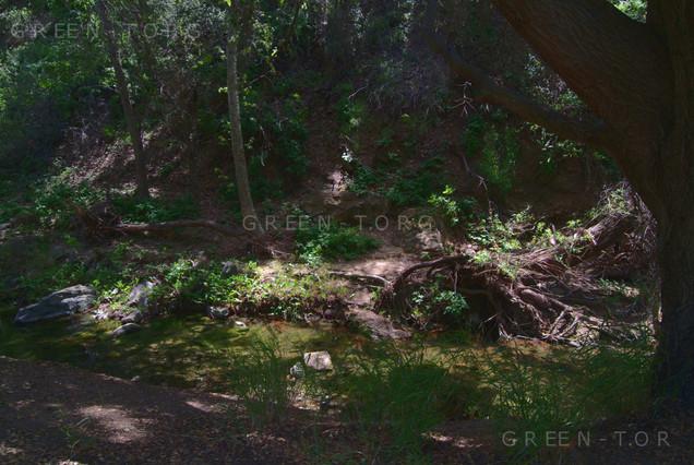 Peaceful Creek (Green T)