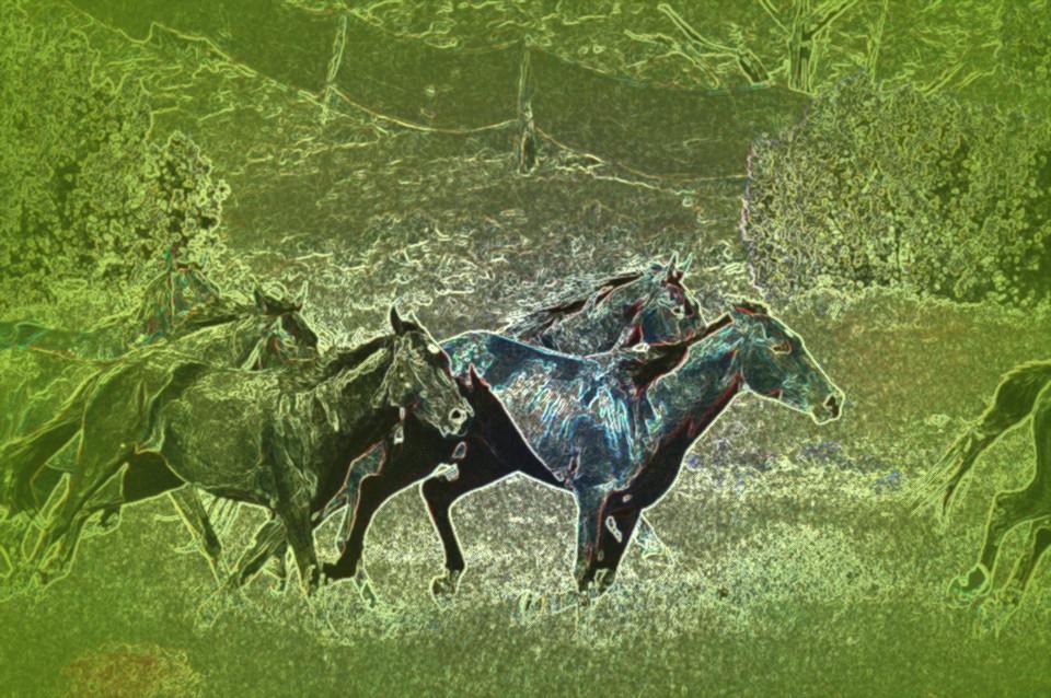 Mystic Wild 1 (Green T)