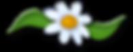 thumbnail_Cyndi Soup - Daisy Accent.png