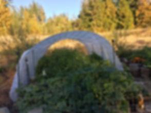 """Lasagna"" garden at The Pond Beyond"