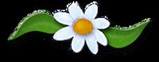 thumbnail_Cyndi Soup - Daisy Accent.webp