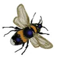 BEE BUTTON.png