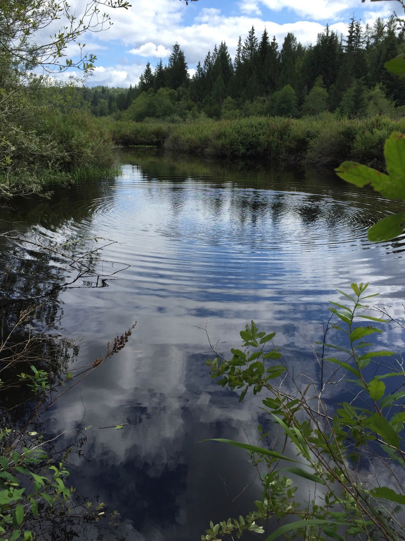 may 2017 pond beyond pond ripples.jpg
