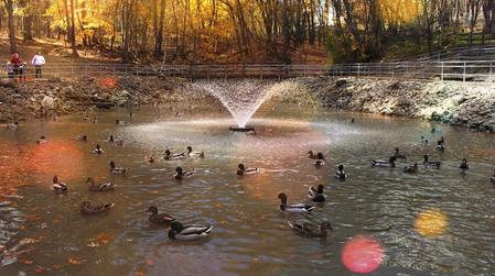 Duck Pond in Autumn