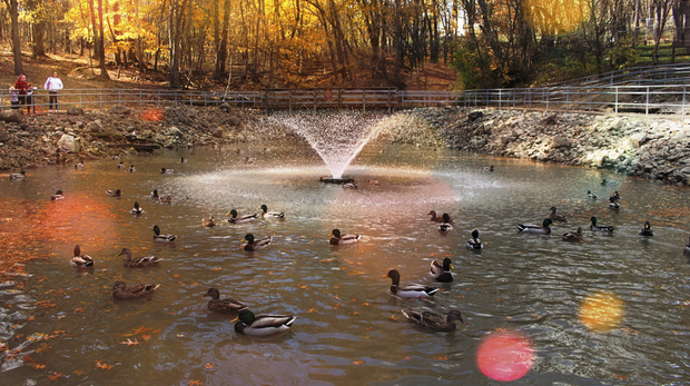 Duck Pond in Autumn