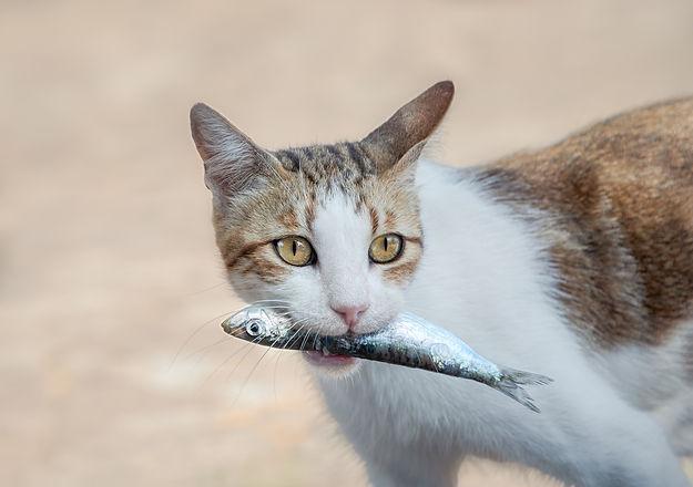 kat met vis.jpg