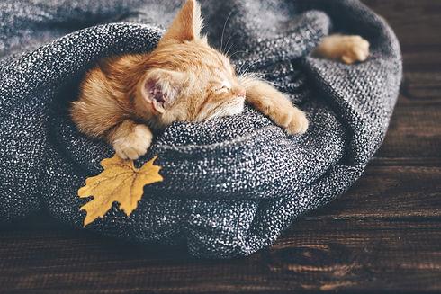 Cute little ginger kitten is sleeping in