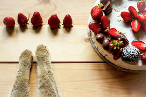 strawberry paws.jpg