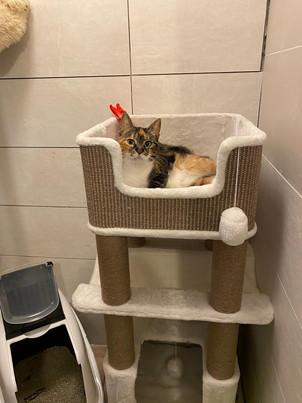 Foto's van de kattenkamers