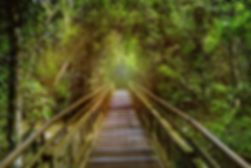 iguazu rainforest.jpg
