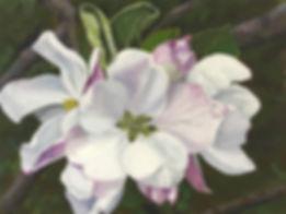 Linda Staiger - Apple Blossom I 3 MB.jpg