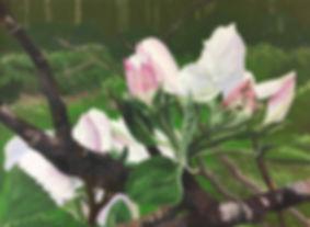 Linda Staiger - Apple Blossom III 3 MB.j